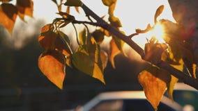 Подсвеченная ветвь времени insunset дерева березы сток-видео