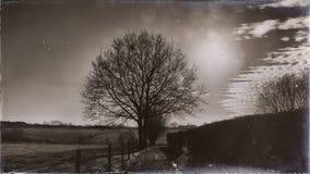 Подсвеченное дерево в винтажном ландшафте с некоторыми облаками стоковое изображение rf