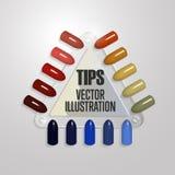 подсказки Комплект ложных ногтей для маникюра Цветовая палитра политуры для расширения ногтя Искусственные ногти на прозрачное ос бесплатная иллюстрация