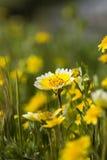 подсказки травы аккуратные Стоковые Изображения