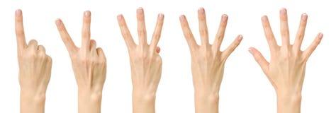 Подсчитывающ женскую руку при французский изолированный маникюр Стоковые Фотографии RF