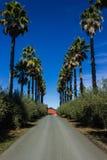 Подъездная дорога выровнянная пальмами Стоковое Изображение