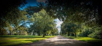 Подъездная дорога под сенью дерева стоковые изображения