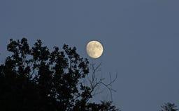 Подъем луны стоковые фотографии rf