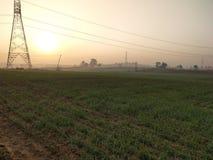 Подъем пшеницы стоковое фото rf