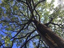 Под ветвью дерева стоковые изображения rf