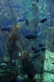 под водой Стоковое фото RF