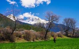 Под горой снега, цветения персика Стоковые Фото