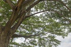 Под деревом с ветвью Стоковое Изображение