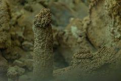 Под землей Красивый вид сталактитов и сталагмитов в подземном cavern - новой пещеры Athos священнейше стоковое фото rf