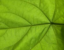 Под листьями стоковые изображения rf