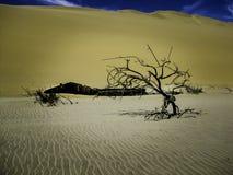 Под песком | намибийской пустыней Стоковые Изображения