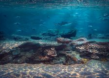 Под приключением скубы воды в карибском море стоковые фото