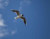 под птицей Стоковая Фотография