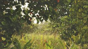 Под рамкой лист дерева джекфрута стоковая фотография rf