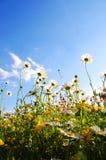 под цветками стоковое изображение rf