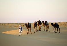 поезд верблюдов Стоковое Фото