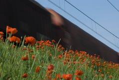 поезд маков стоковое фото