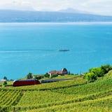 Поезд на террасе виноградника Lavaux на женевском озере Альпах Стоковые Изображения