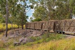 Поезд сахарного тростника тянуть урожай для того чтобы филировать стоковые фотографии rf
