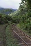 поезд следов пущи Стоковые Фото