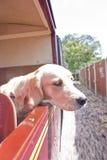 поезд собаки Стоковая Фотография RF