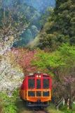 Поезд Sagano романтичный бежать между Сакурой Стоковое Изображение