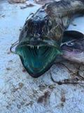 Поездка на рыбалку Стоковая Фотография
