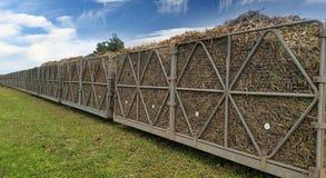 Поезд сахарного тростника стоковые фотографии rf
