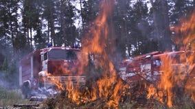 Пожарные машины огнем Воспламените иглы дерева опасные к сцене леса Небезопасные активные остатки на природе с огнем быстро стоковые фото