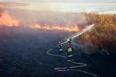 Пожарные сражают лесной пожар стоковое изображение rf