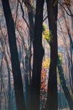 пожары Стоковые Изображения RF