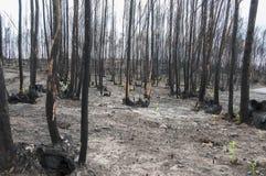 пожары Стоковая Фотография