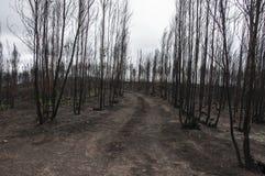 пожары Стоковое Фото