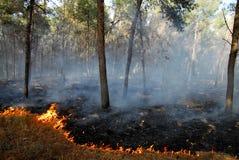 Пожары Bush причины волн тепла стоковые фотографии rf