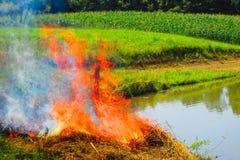 Пожар в поле Стоковые Фото