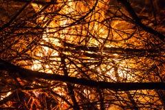 Пожар в природе стоковое фото