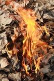 пожар дефолиации стоковое изображение