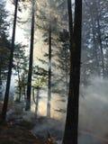 Пожар и пуща стоковое изображение rf