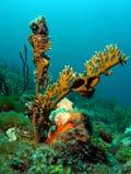 пожар коралла Стоковые Изображения RF