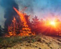 пожар лесной пожар, горящий сосновый лес в дыме и пламена стоковые изображения rf