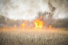 пожар одичалый стоковые фото