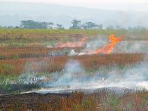 пожар поля стоковые фотографии rf