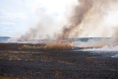 пожар поля Стоковые Изображения RF