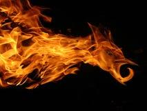пожар птицы Стоковая Фотография