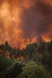 Пожар пущи одичалый Стоковая Фотография RF