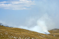 Пожар сухой травы стоковое изображение