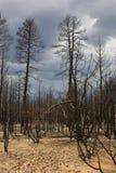 пожар forrest стоковые фотографии rf