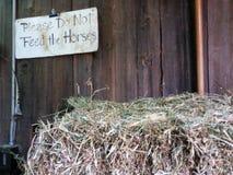 Пожалуйста не подайте лошади Стоковая Фотография RF