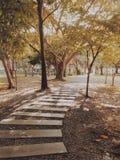 Пожелтейте сад Стоковое Фото